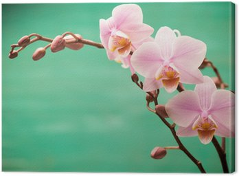 Canvas Print Orchid.