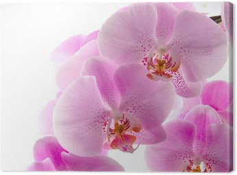 Canvas Print Orchidee