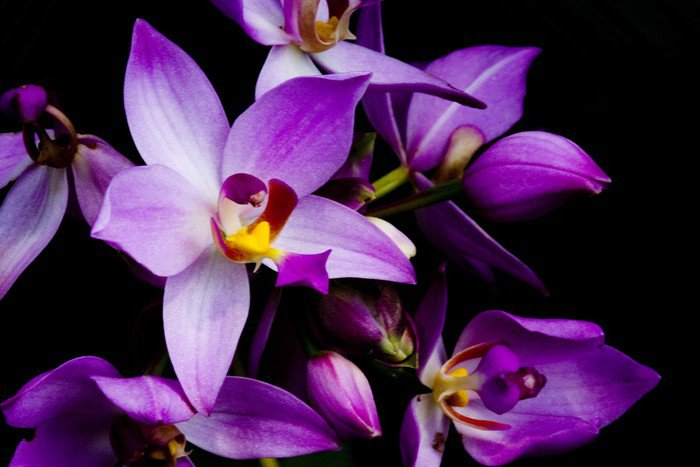 Canvas Print orchids - Styles