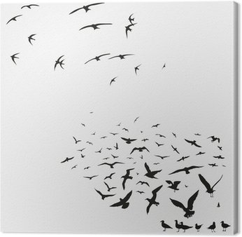 pack of seagulls and swallows Canvas Print