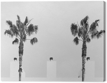 palm tree symmetry