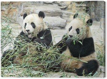 Panda Bears in Beijing China Canvas Print