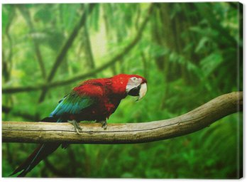 Parrot in the jungle Canvas Print