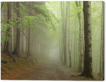 path on the border between coniferous and deciduous trees