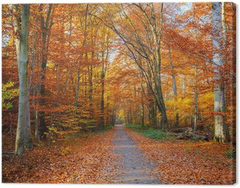 Canvas Print Pathway in the autumn forest
