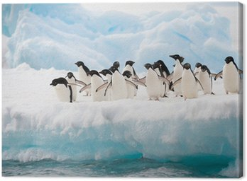 Canvas Print Penguins on the snow