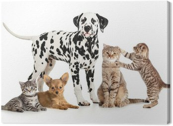 Canvas Print pets animals group collage for veterinary or petshop isolated