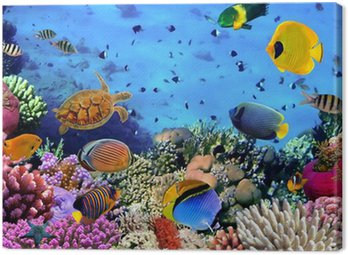 Canvas Print Photo of a coral colony