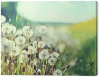 Photo presenting field of dandelions Canvas Print