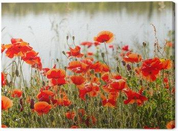 Canvas Print Picturesque poppy composition