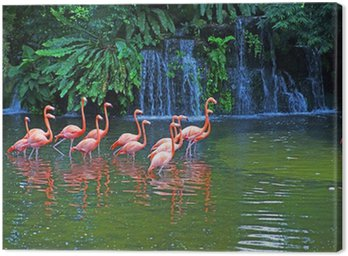 Pink flamingos on lake with waterfalls in rainorest. Canvas Print