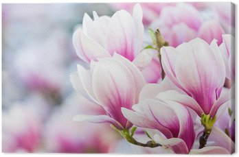 pink flower magnolia Canvas Print