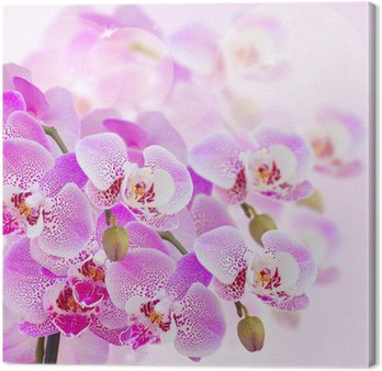 pink orchid branch close up Canvas Print
