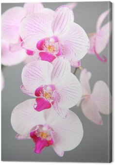 Canvas Print Pink orchid