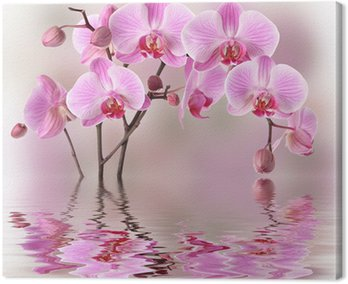Pink orchids with water reflexion Canvas Print