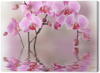 Canvas Print Pink orchids with water reflexion