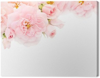 Canvas Print Pink roses and buds in the corner of the white background