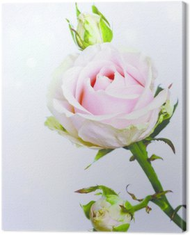 Canvas Print Pink roses
