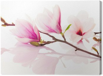 Pink spring flowers with reflection Canvas Print