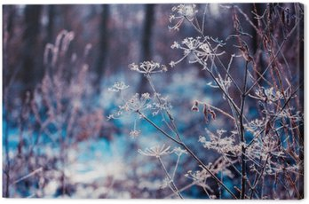 Plants covered with hoarfrost Canvas Print