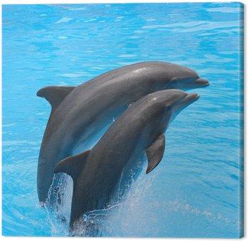 Canvas Print Playful dolphins