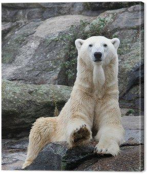 Canvas Print Polar bear portrait