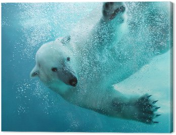 Canvas Print Polar bear underwater attack