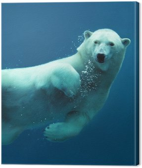 Polar bear underwater close-up