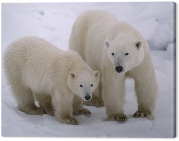Canvas Print Polar bear with her cub of the year. Canadian Arctic