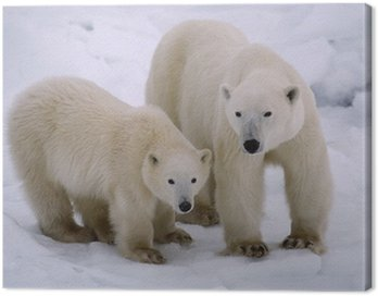 Polar bear with her cub of the year. Canadian Arctic