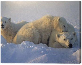 Canvas Print Polar bear with her cubs