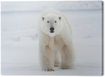 Canvas Print Polar bear
