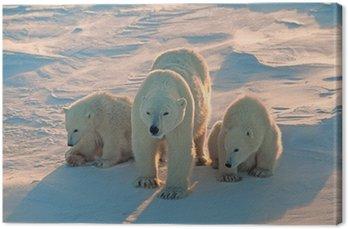 Canvas Print Polar bears in Canadian Arctic