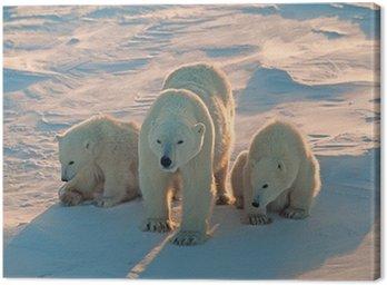 Polar bears in Canadian Arctic