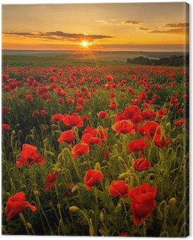 Poppy field at sunset Canvas Print