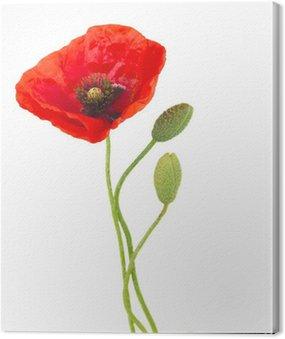 Canvas Print Poppy flowers