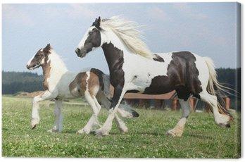 Canvas Print Portrait of nice arabian horse