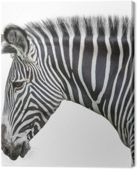 Canvas Print portrait of zebra