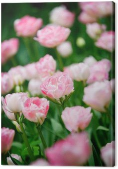 Canvas Print Pretty pink tulips