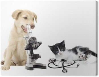 Canvas Print puppy and kitten vets