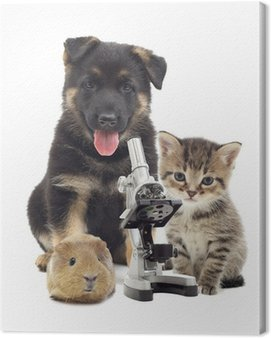 Canvas Print Puppy and microscope