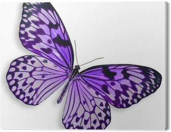 Canvas Print Purple Butterfly flying