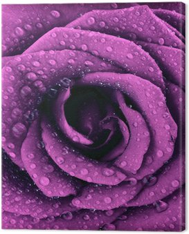 Canvas Print Purple dark rose background