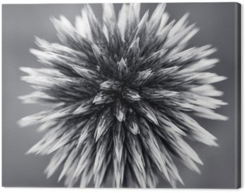Canvas Print Purple Globe Thistle B&W