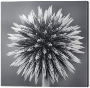 Purple Globe Thistle B&W