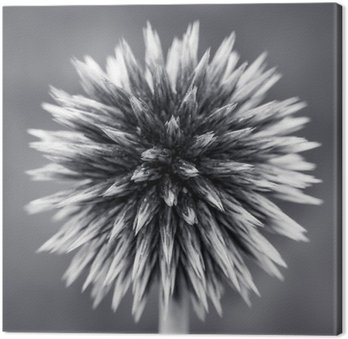 Purple Globe Thistle B&W Canvas Print