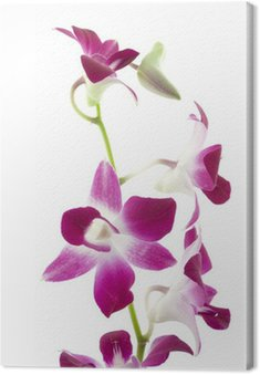 Canvas Print purple orchid on white background