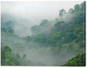 Canvas Print rainforest morning fog