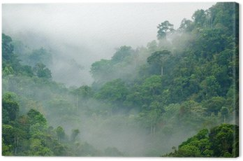 Canvas Print rainforest morning fog