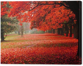 red autumn in the park Canvas Print